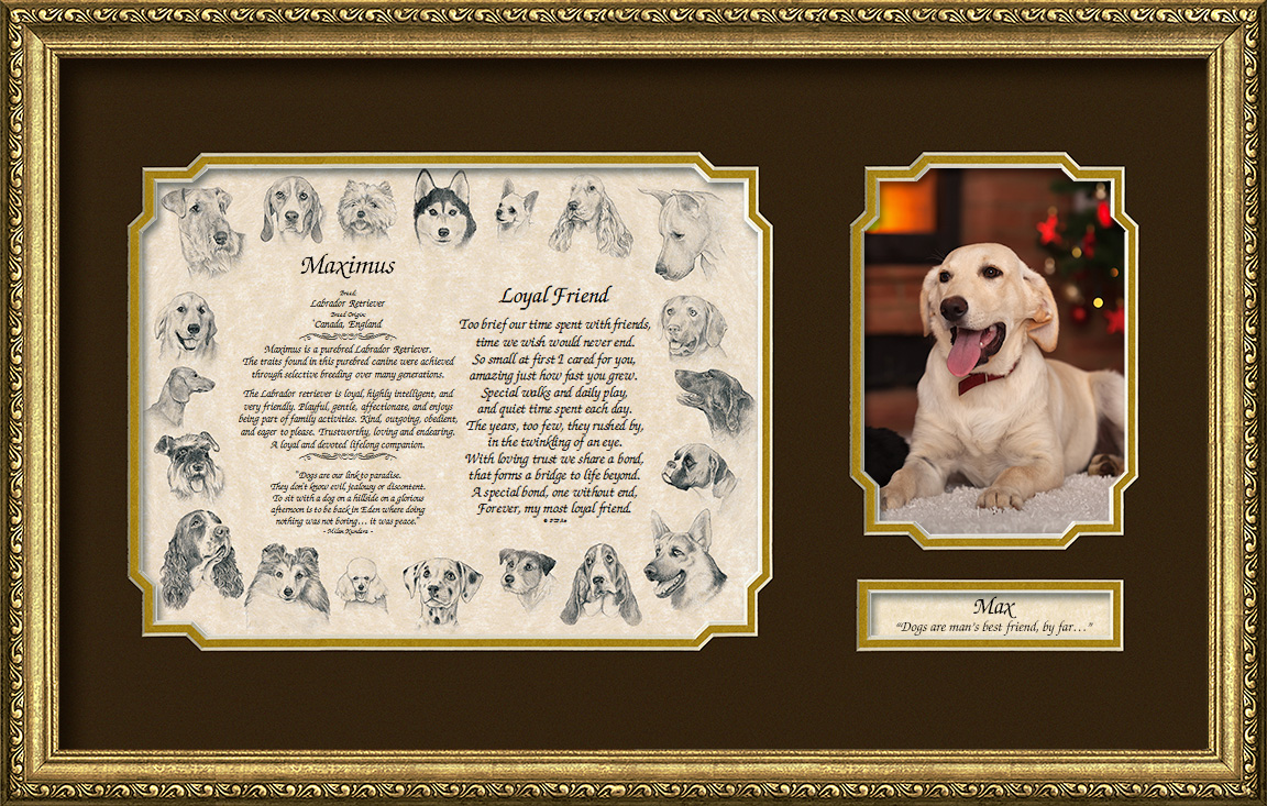 Pets On Arts Sample Gift