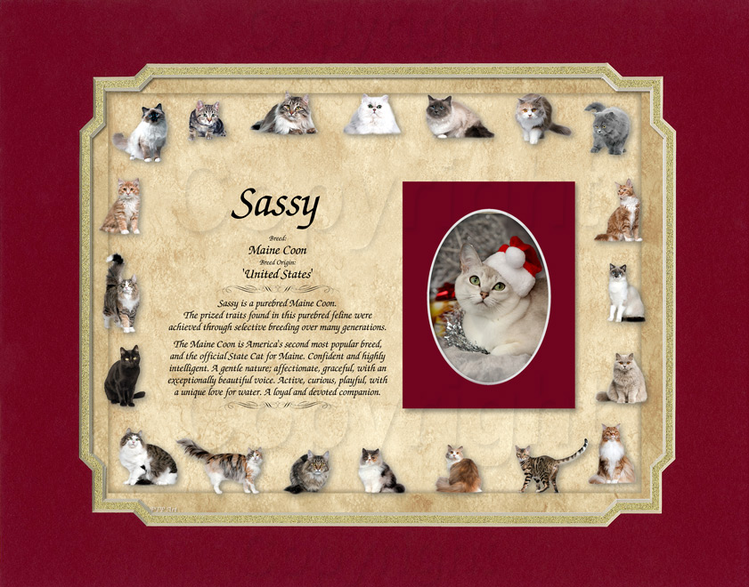 Cat Keepsake - Maine Coon Breed