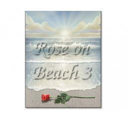 Rose on Beach 3