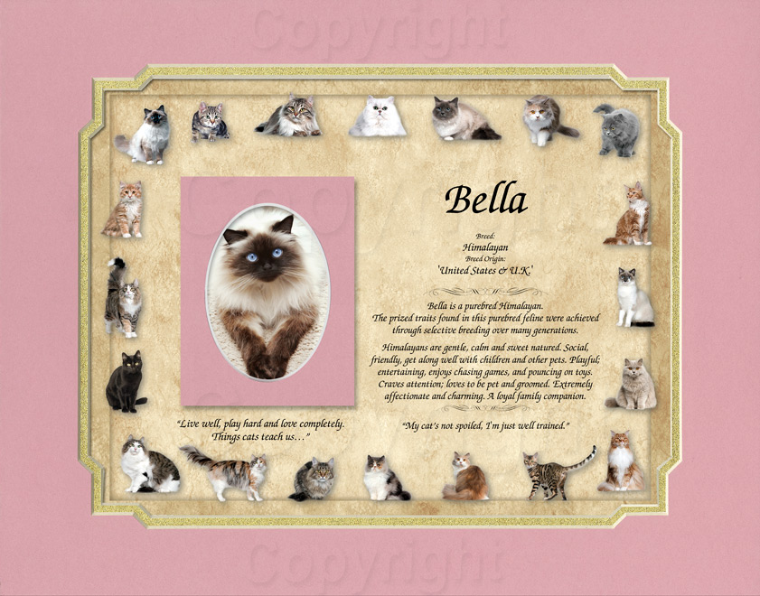 Cat Breed Keepsake - 11x14 mat with photo mat