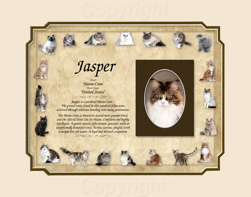 Cat Keepsake - Maine Coon Breed 2